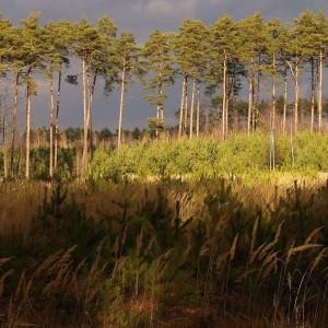 Odnowienie lasu, fot. Tomasz Banaszkiewicz