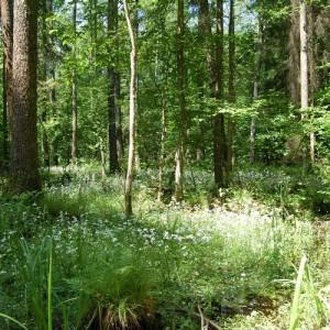W lesie, fot. Archiwum Nadleśnictwa Browsk