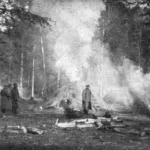 Wypalanie drewna w mieleszach, fot. archiwum Nadleśnictwa Białowieża