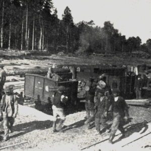 Załadunek pozyskanego drewna, fot. archiwum Nadleśnictwa Białowieża