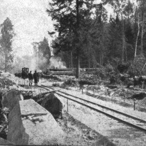Wywóz drewna kolejką leśną, fot. archiwum Nadleśnictwa Białowieża