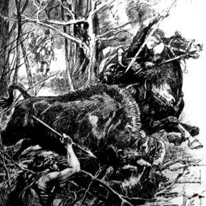 Król Władysław Jagiełło podczas polowania na Żubry w Puszczy Białowieskiej - rycina, z archiwum BPN