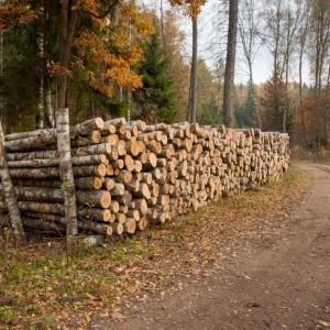 Drewno - fot. Sławomir Kowalczyk