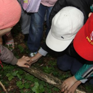"""Dzieci szukają skarbów . Ścieżka """"Puszczańskie mokradła"""" – fot U. Olejnicka"""