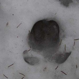 Trop w śniegu, fot. Klaudia Formejster