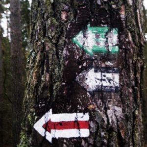 Oznakowanie ścieżek w lesie, fot. Klaudia Formejster