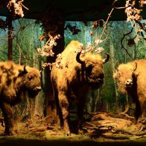 Ekspozycja w muzeum BPN, fot. Łukasz Ławrysz