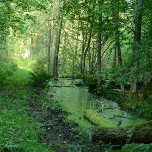 Białowieski Park Narodowy, Fot. Łukasz Ławrysz