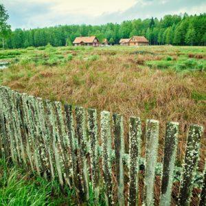 Miodowa kolonia, fot. Mariola Stupak